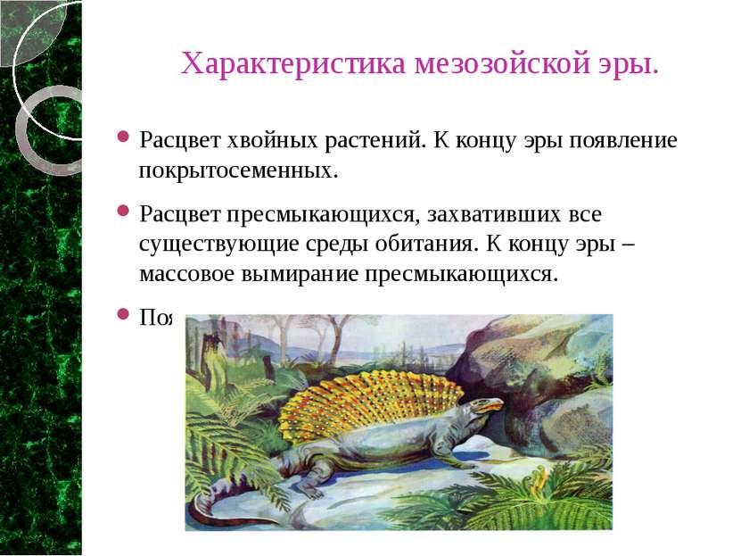 Характеристика мезозойской эры. Расцвет хвойных растений. К концу эры появлен...