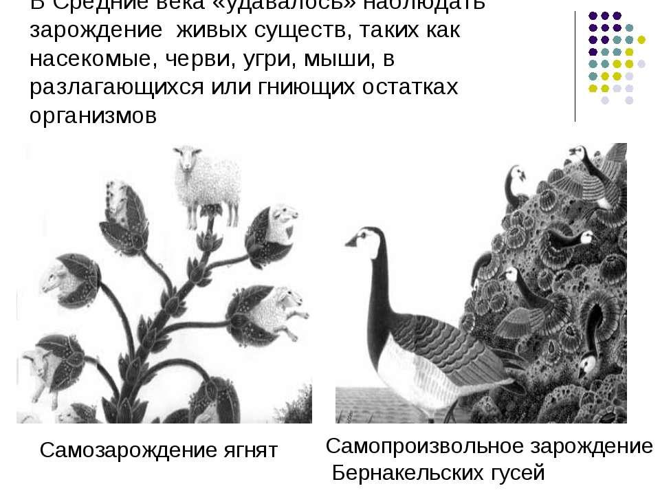 В Средние века «удавалось» наблюдать зарождение живых существ, таких как насе...