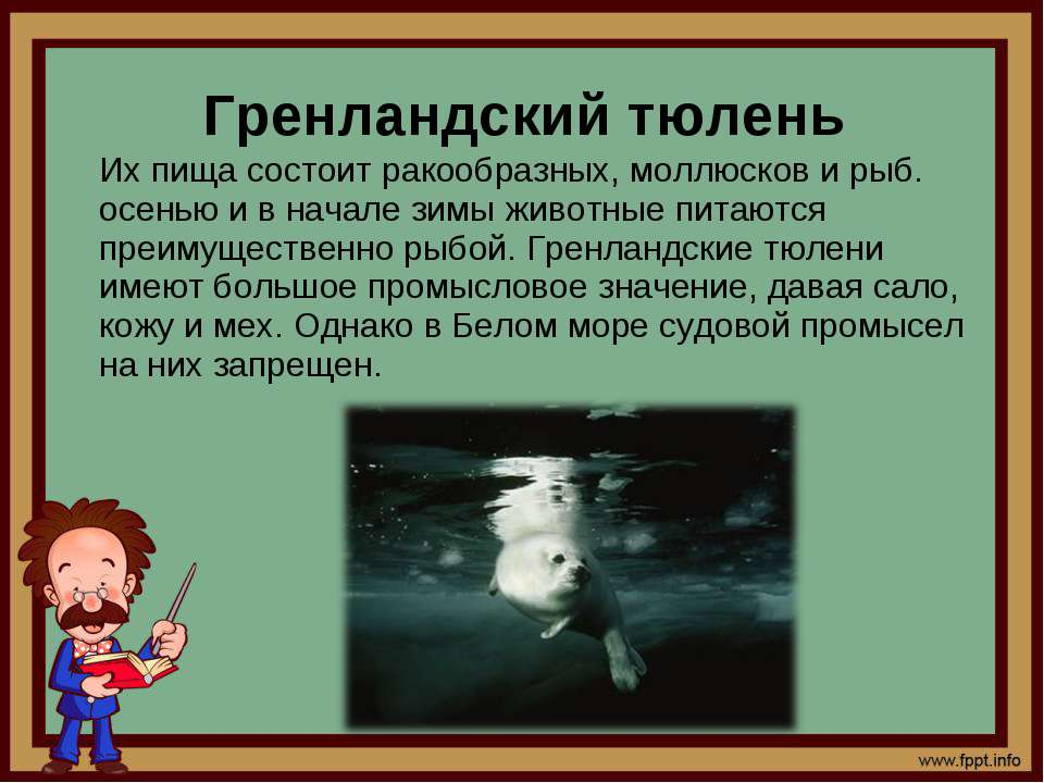 Их пища состоит ракообразных, моллюсков и рыб. осенью и в начале зимы животны...
