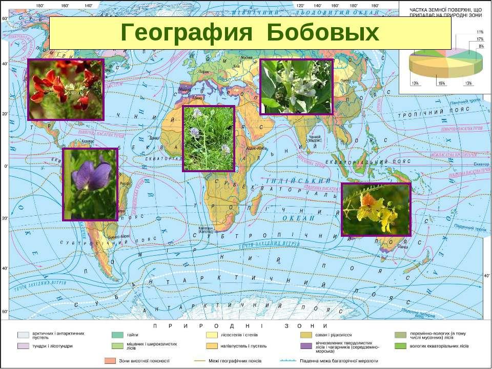 География Бобовых