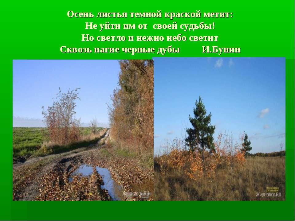 Осень листья темной краской метит: Не уйти им от своей судьбы! Но светло и не...