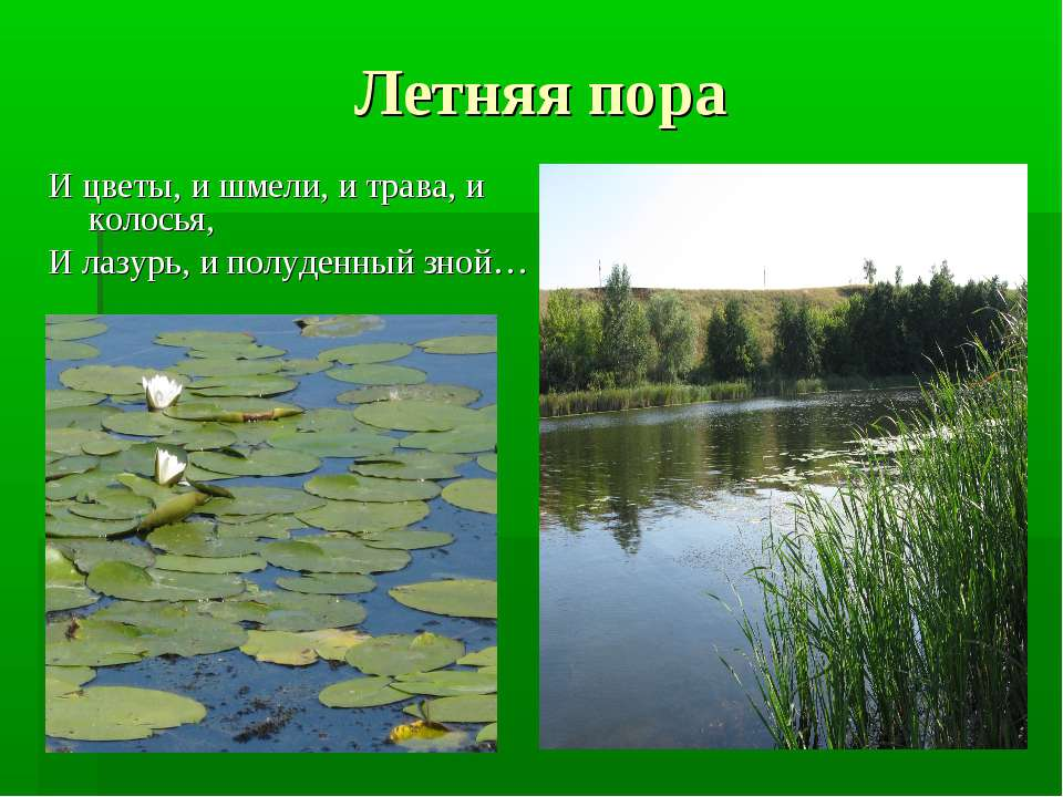 Летняя пора И цветы, и шмели, и трава, и колосья, И лазурь, и полуденный зной…