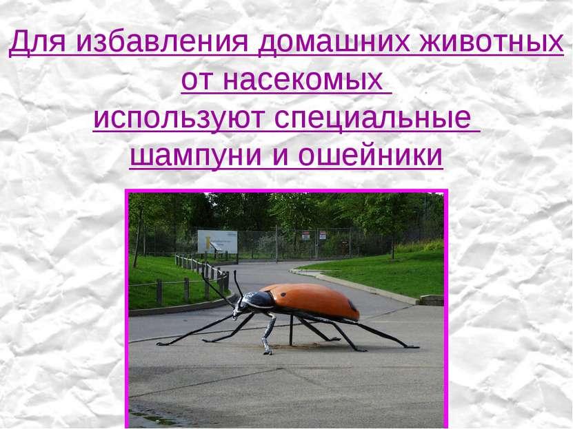 Для избавления домашних животных от насекомых используют специальные шампуни ...