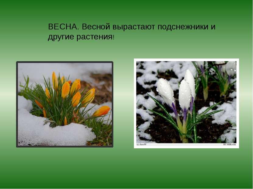 ВЕСНА. Весной вырастают подснежники и другие растения!