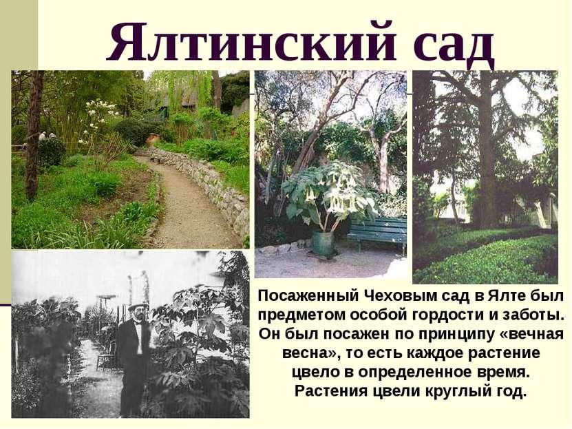 Ялтинский сад Посаженный Чеховым сад в Ялте был предметом особой гордости и з...