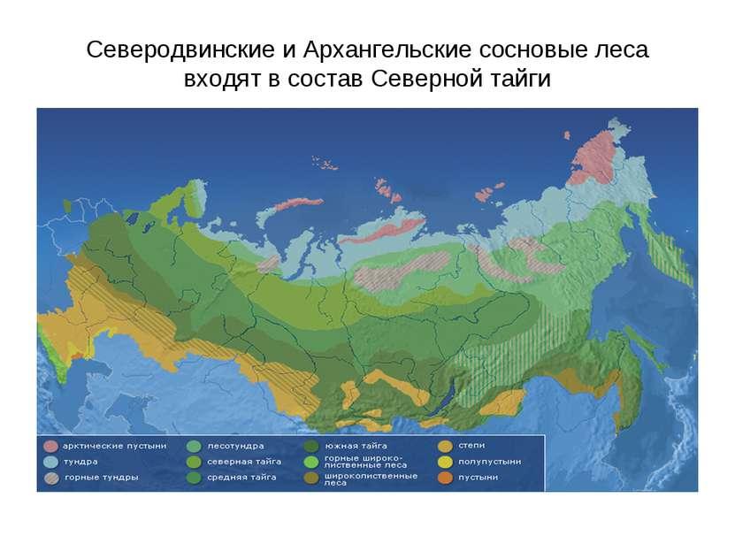 Северодвинские и Архангельские сосновые леса входят в состав Северной тайги