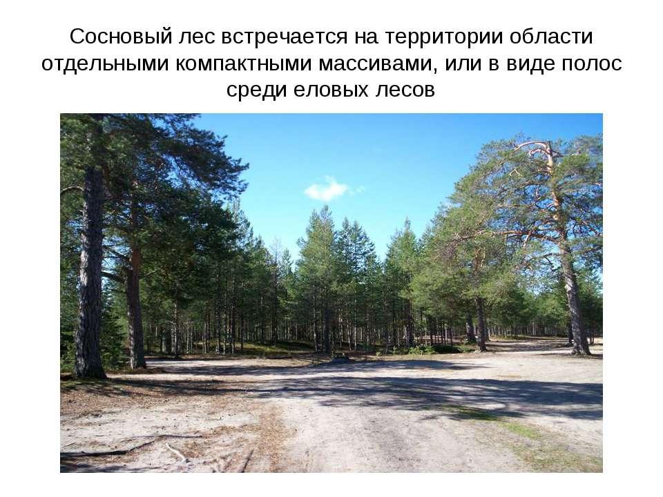 Сосновый лес встречается на территории области отдельными компактными массива...
