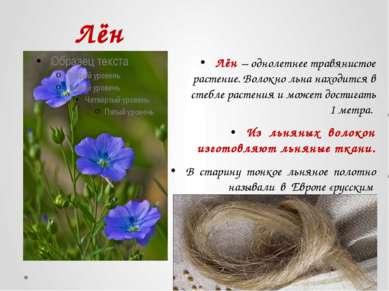 Лён Лён – однолетнее травянистое растение. Волокно льна находится в стебле ра...