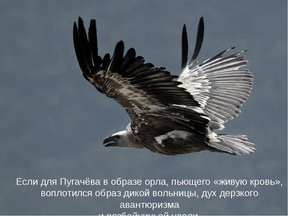 Если для Пугачёва в образе орла, пьющего «живую кровь», воплотился образ дико...