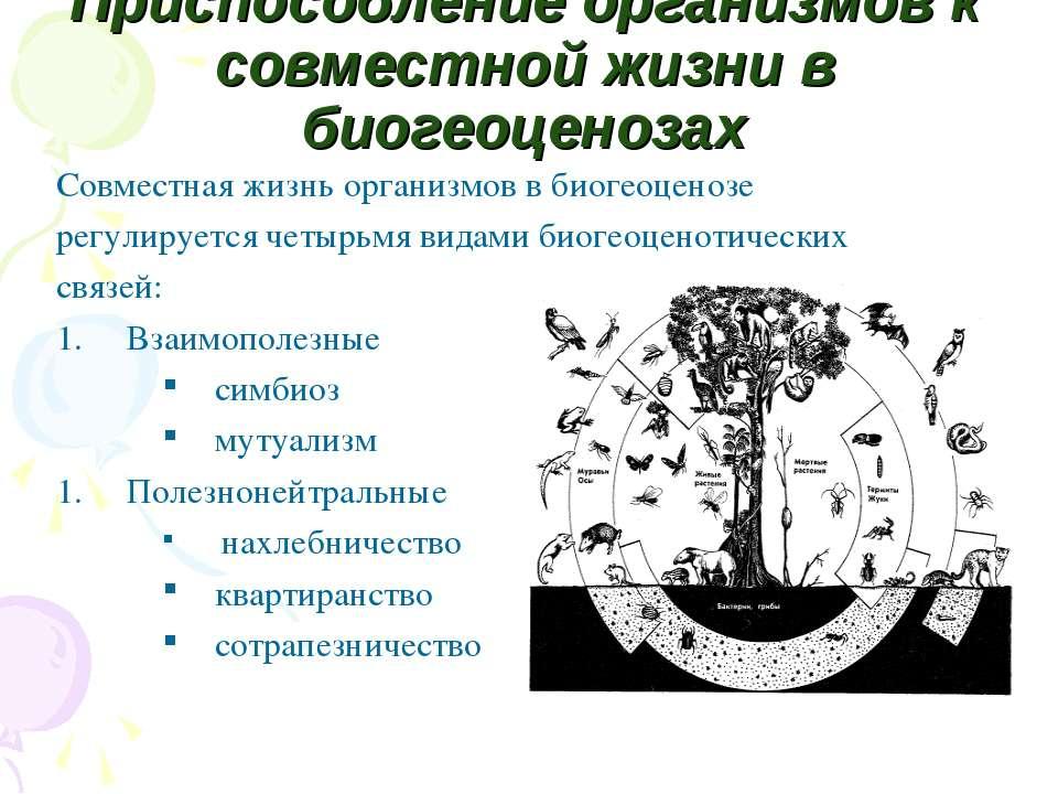 Приспособление организмов к совместной жизни в биогеоценозах Совместная жизнь...