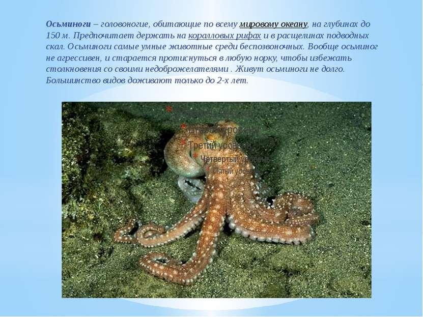 Осьминоги – головоногие, обитающие по всемумировому океану, на глубинах до 1...