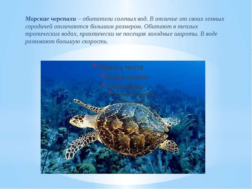 Морские черепахи – обитатели соленых вод.В отличие от своих земных сородичей...