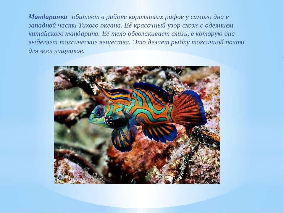 Мандаринка -обитает в районе коралловых рифов у самого дна в западной части Т...