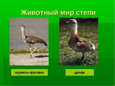 Животный мир степи журавль-красавка дрофа