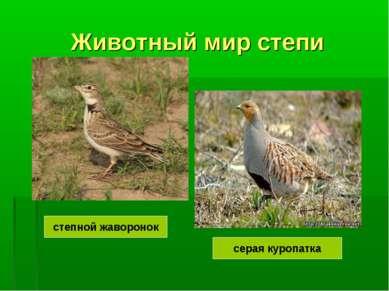 Животный мир степи степной жаворонок серая куропатка