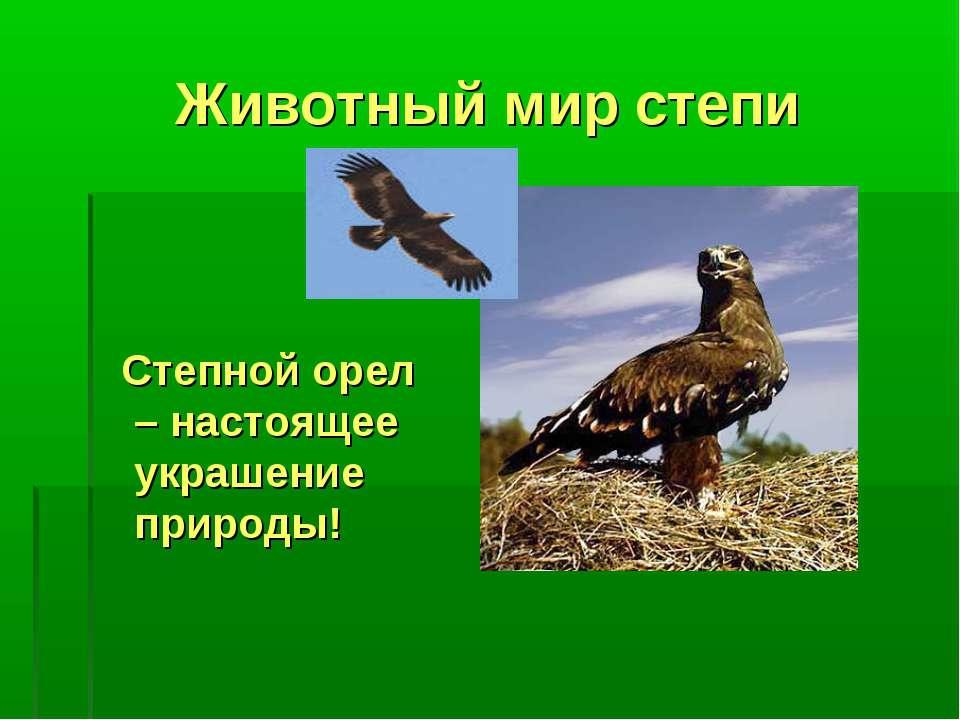Животный мир степи Степной орел – настоящее украшение природы!