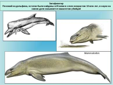 Зигофизитер Похожий на дельфина, остатки были найдены в Италии в слоях возрас...