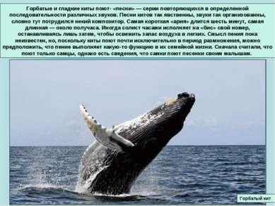 Горбатые и гладкие киты поют- «песни» — серии повторяющихся в определенной по...