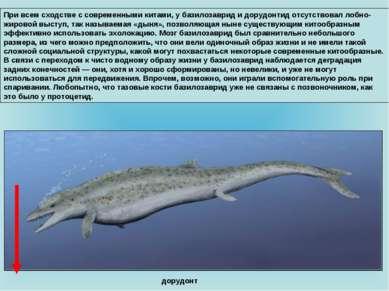 При всем сходстве с современными китами, у базилозаврид и дорудонтид отсутств...
