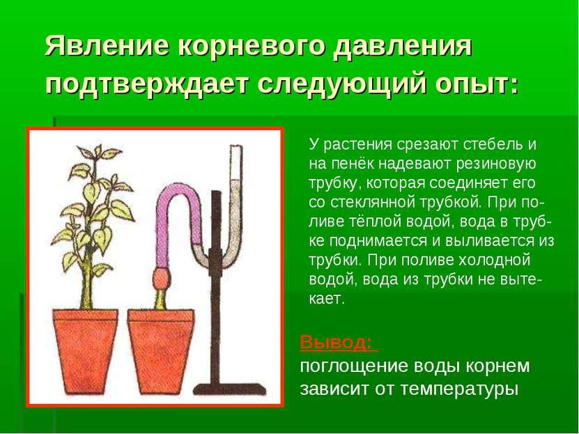 Явление корневого давления подтверждает следующий опыт: У растения срезают ст...