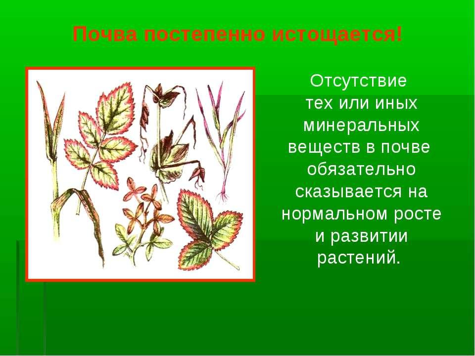 Отсутствие тех или иных минеральных веществ в почве обязательно сказывается н...