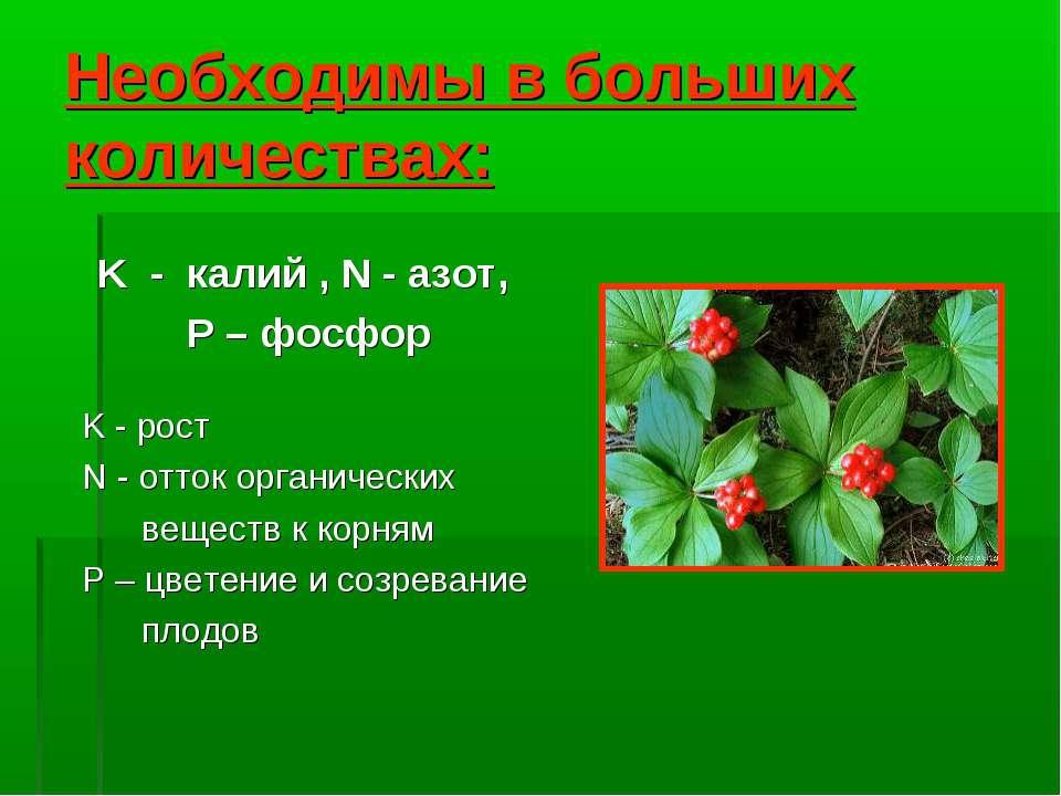 Необходимы в больших количествах: K - калий , N - азот, P – фосфор K - рост N...