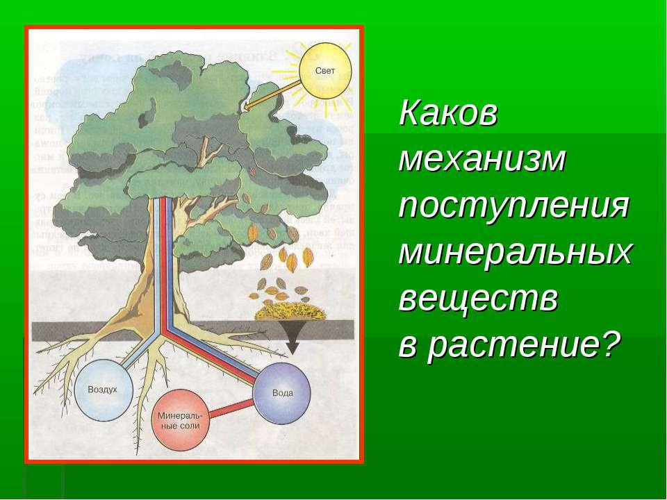 Каков механизм поступления минеральных веществ в растение?