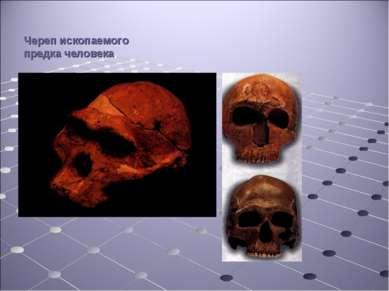 Череп ископаемого предка человека