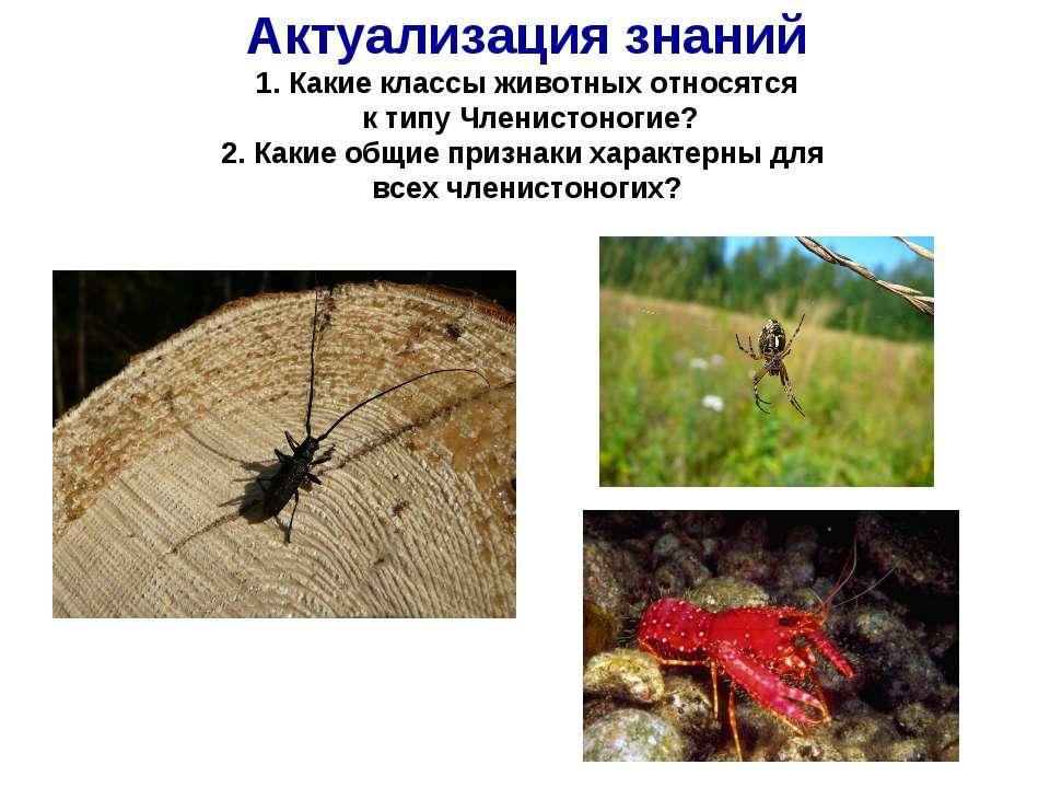 Актуализация знаний 1. Какие классы животных относятся к типу Членистоногие? ...