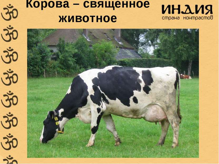 Корова – священное животное