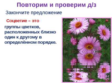 Повторим и проверим д/з Закончите предложение Соцветие – это … группы цветков...
