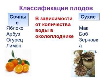 Классификация плодов Сочные Сухие В зависимости от количества воды в околопло...