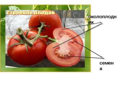 околоплодник семена