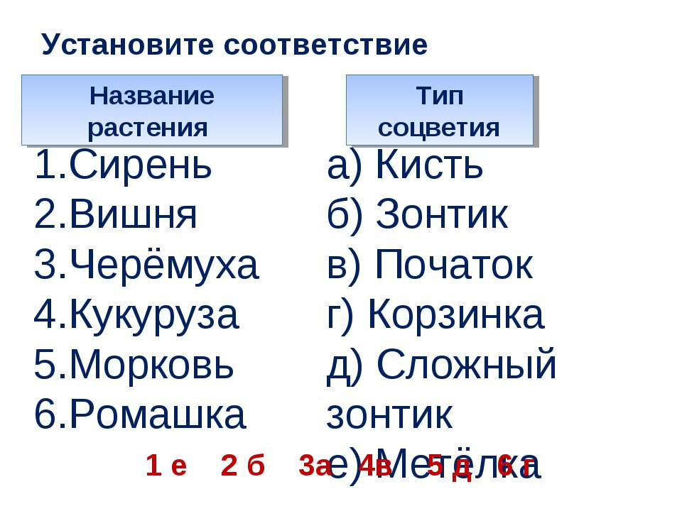 Установите соответствие Название растения Тип соцветия 1.Сирень 2.Вишня 3.Чер...