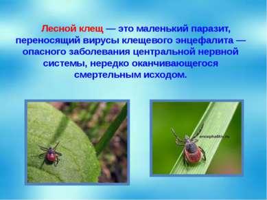 Лесной клещ — это маленький паразит, переносящий вирусы клещевого энцефалита ...