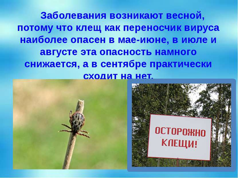 Заболевания возникают весной, потому что клещ как переносчик вируса наиболее ...