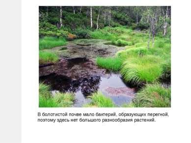 В болотистой почве мало бактерий, образующих перегной, поэтому здесь нет боль...