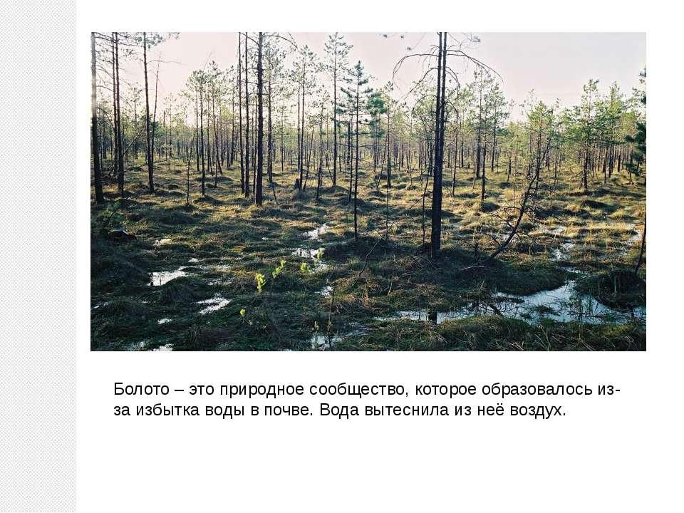 Болото – это природное сообщество, которое образовалось из-за избытка воды в ...