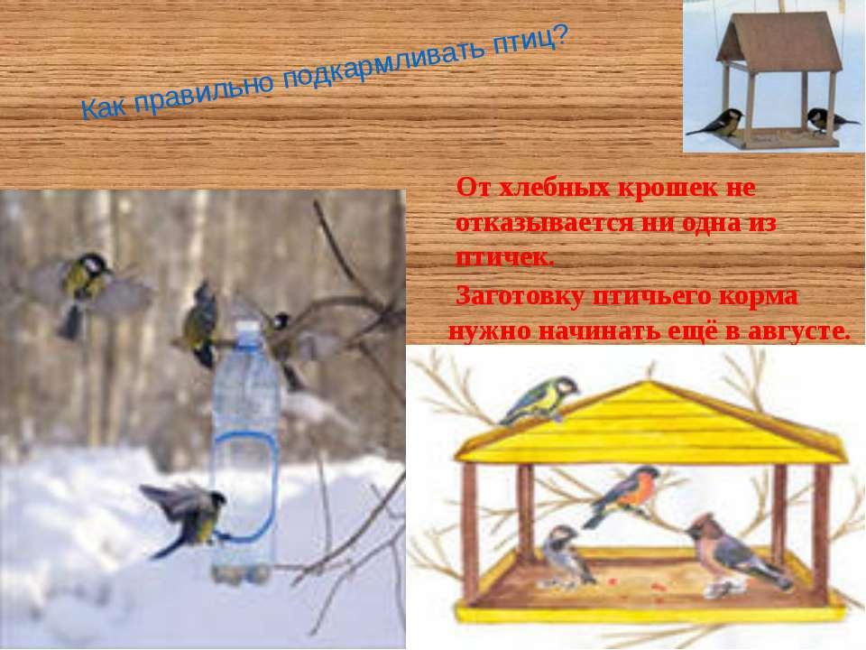 Как правильно подкармливать птиц? Заготовку птичьего корма нужно начинать ещё...