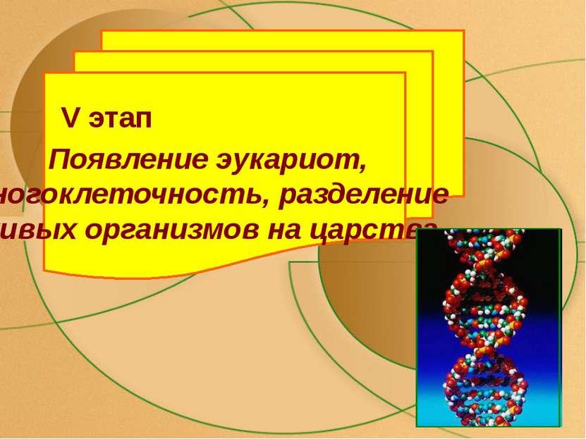 V этап Появление эукариот, многоклеточность, разделение живых организмов на ц...