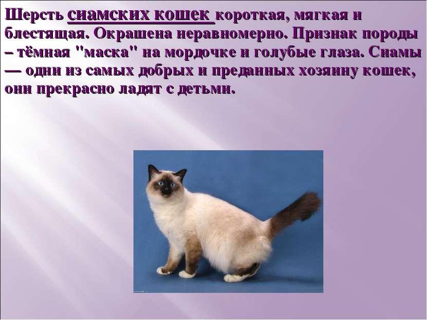Шерсть сиамских кошек короткая, мягкая и блестящая. Окрашена неравномерно. Пр...
