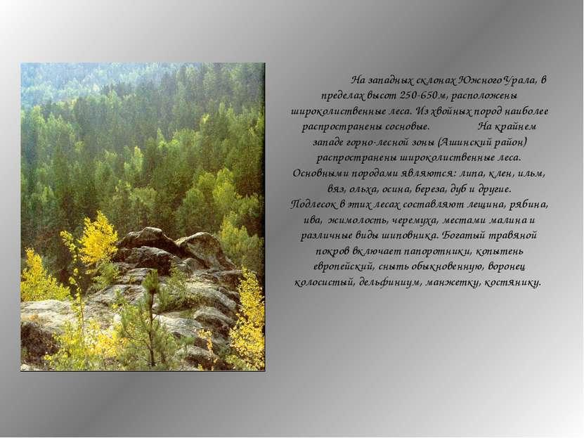На западных склонах Южного Урала, в пределах высот 250-650м, расположены широ...