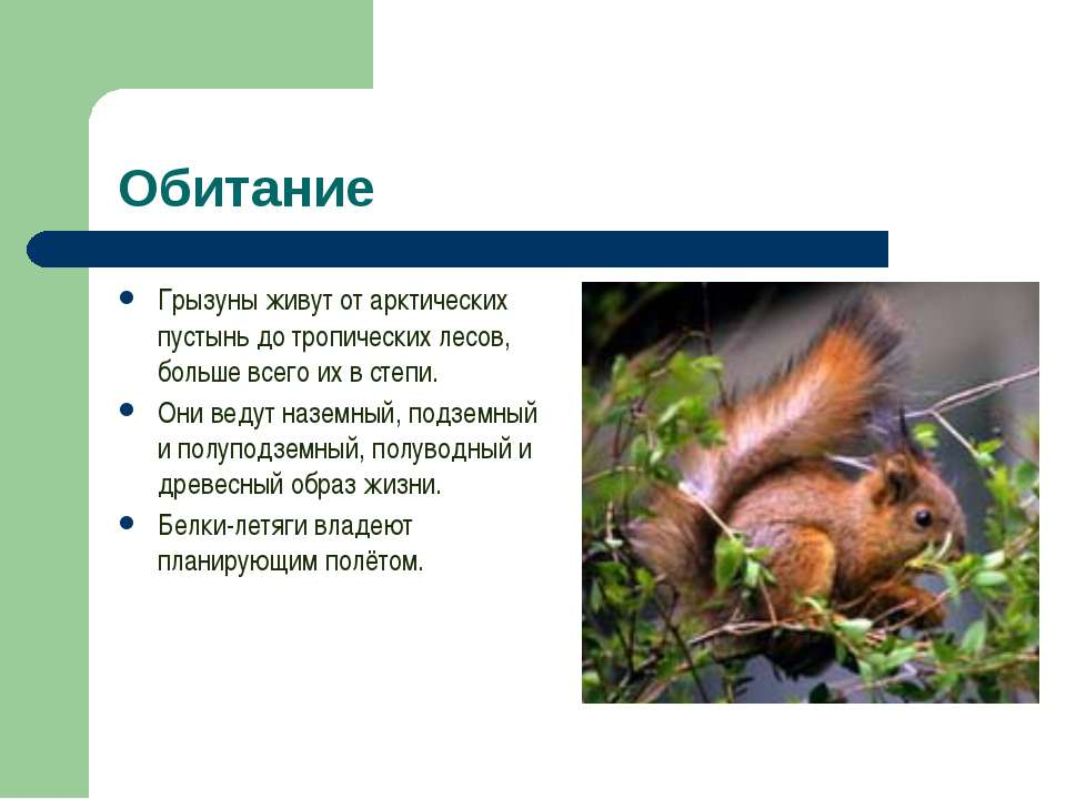 Обитание Грызуны живут от арктических пустынь до тропических лесов, больше вс...