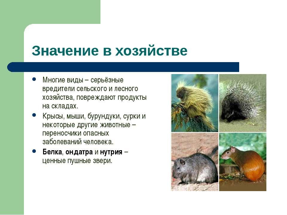Значение в хозяйстве Многие виды – серьёзные вредители сельского и лесного хо...