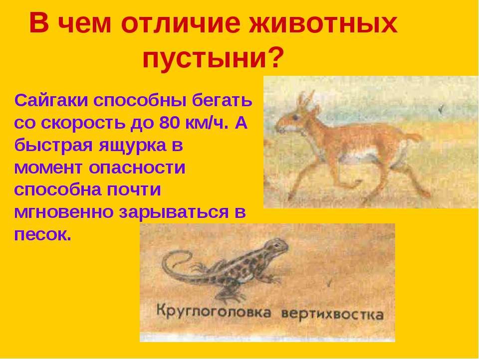 В чем отличие животных пустыни? Сайгаки способны бегать со скорость до 80 км/...