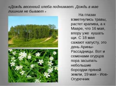 .    На глазах взметнулись травы, растет крапива, а к Мавре, что 16 мая, ...