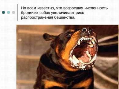 Но всем известно, что возросшая численность бродячих собак увеличивает риск р...