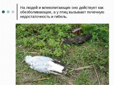 На людей и млекопитающих оно действует как обезболивающее, а у птиц вызывает ...