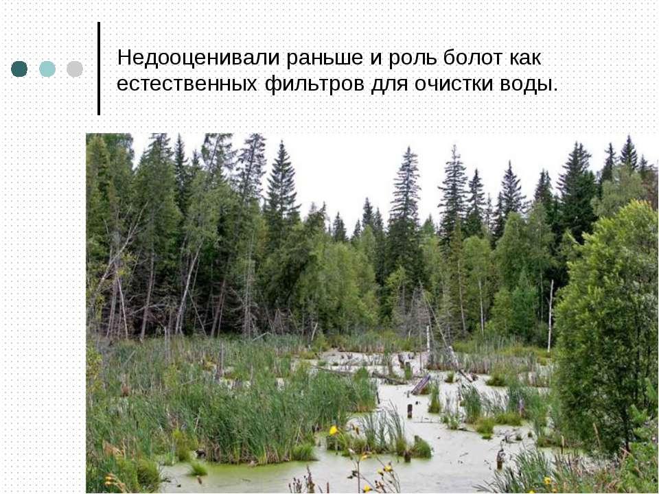Недооценивали раньше и роль болот как естественных фильтров для очистки воды.