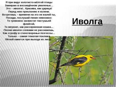 Я при виде золотисто-жёлтой птицы Замираю в восхищённом умиленьи… Это – иволг...